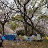 花見会場で思った日本の平和。そして安武さんちの今後の平和!?